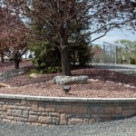 circular stone wall with tree in center